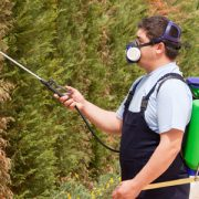 pest-management-image